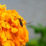 8 Essential oils that keep insects away naturally